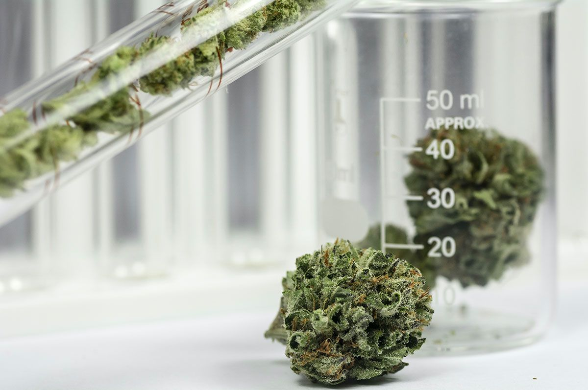 Medlab Cannabis in a beaker